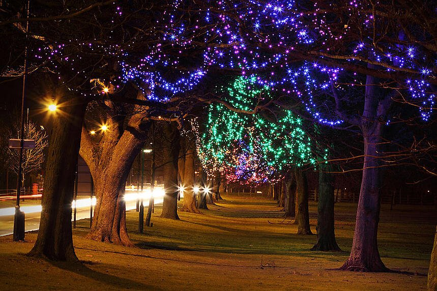 9249-trees-decorated-at-night-with-christmas-lights-pv