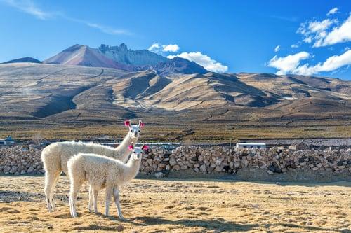 NOR035 _ Uyuni Bolivia