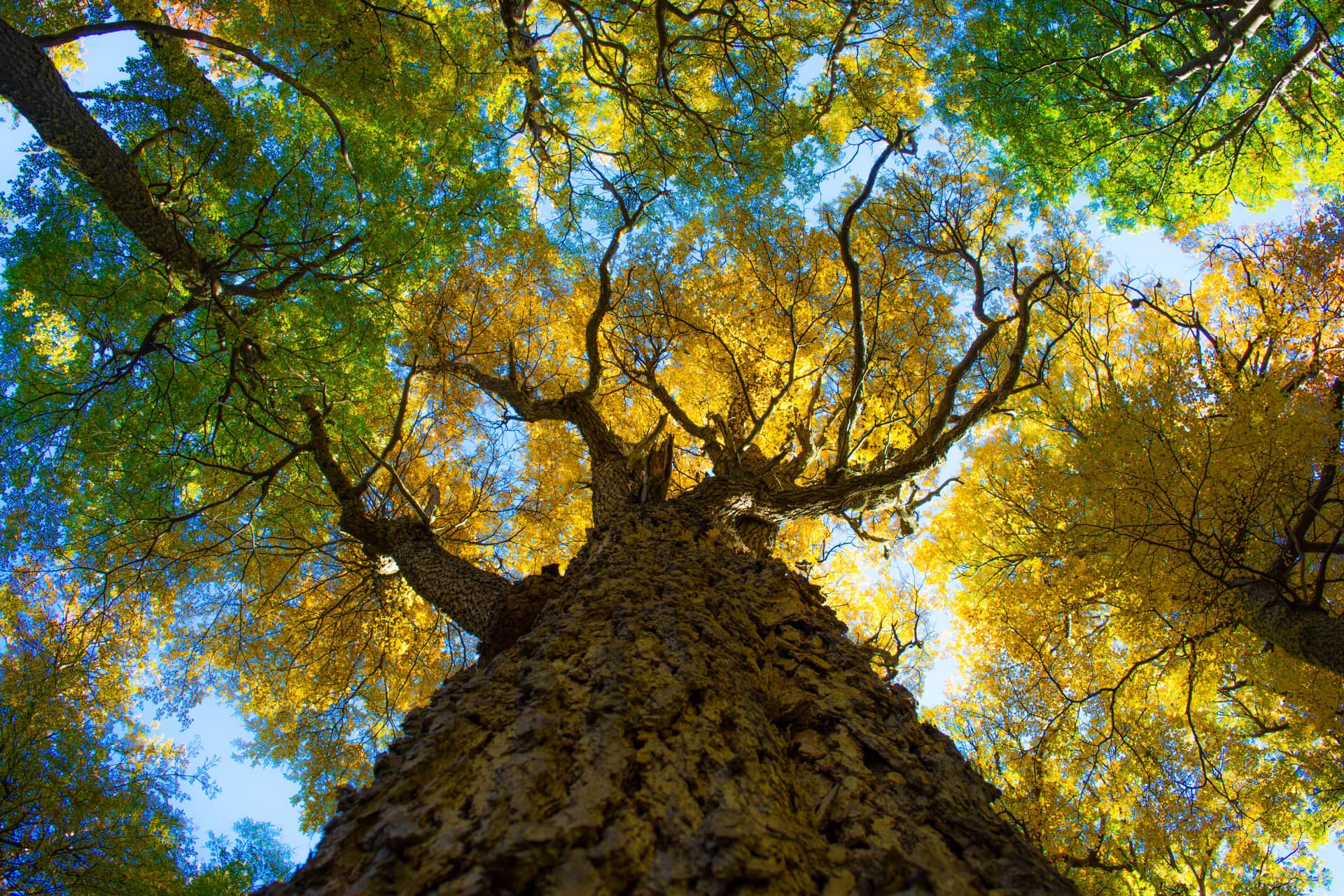 Big tree in Torres del Paine