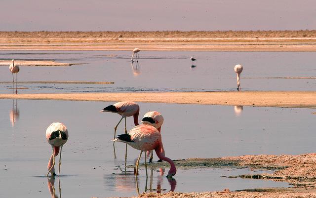 flamingos-13