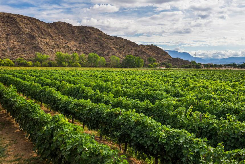 Cafayate Salta Wineyards