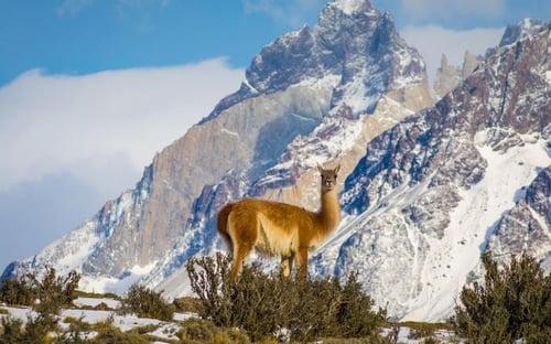 Patagonia en invierno