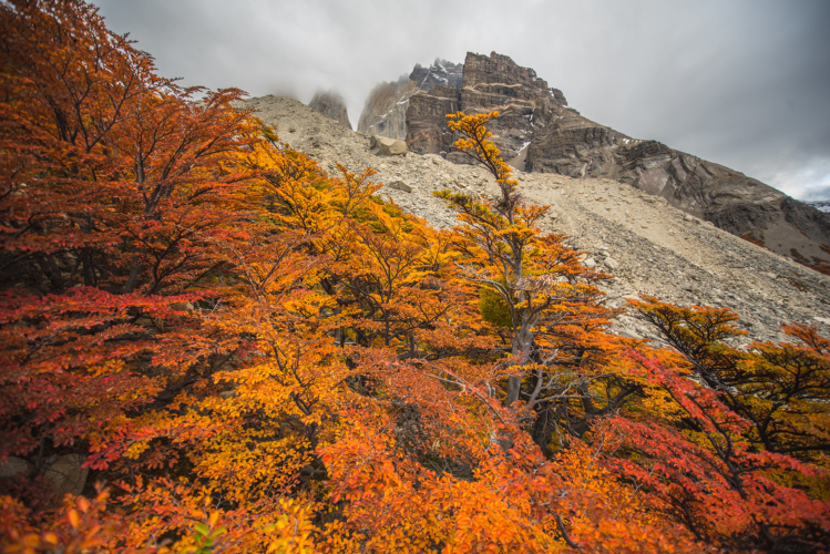 Autumn Foliage in Torres del Paine