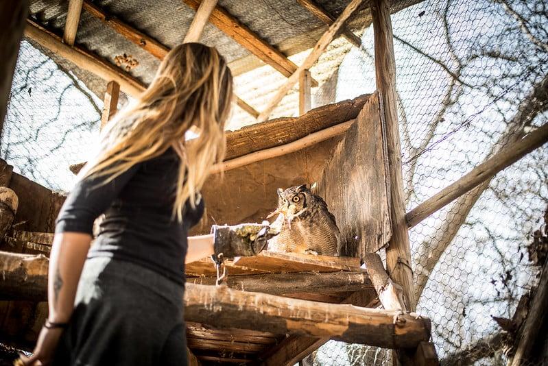 owl-refugio-cascada-2