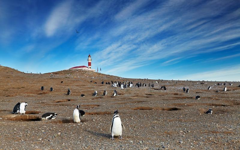 penguins magdalena island chile