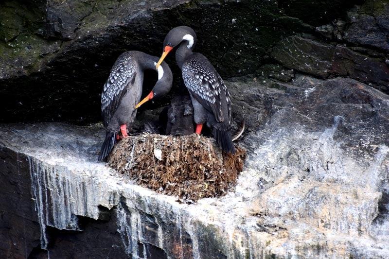 Birds in Punta Choros