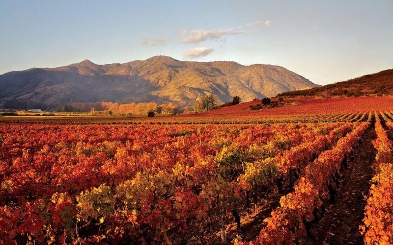 vineyard_0