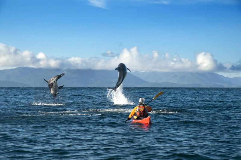 Sea kayaking in Punta Arenas