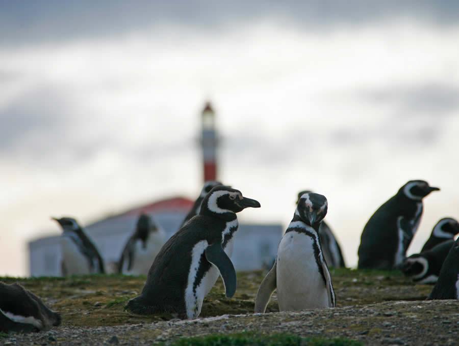 penguins_in_magdalena_island