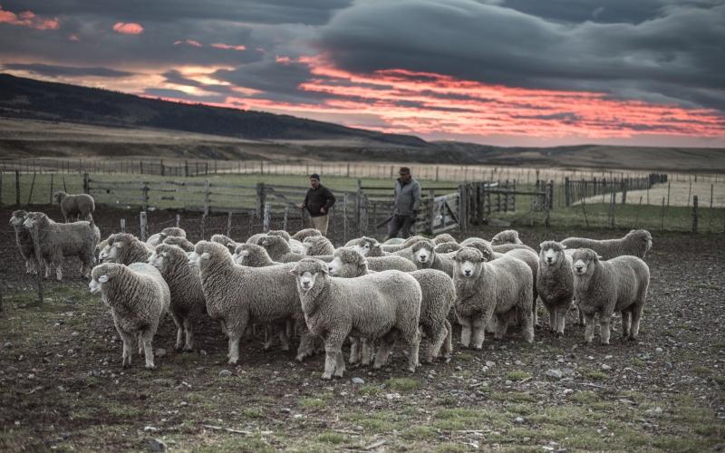 Estancia Life in Patagonia
