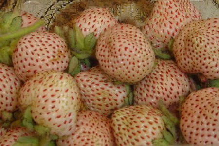 frutilla blanca