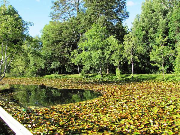 Parque Saval Valdivia