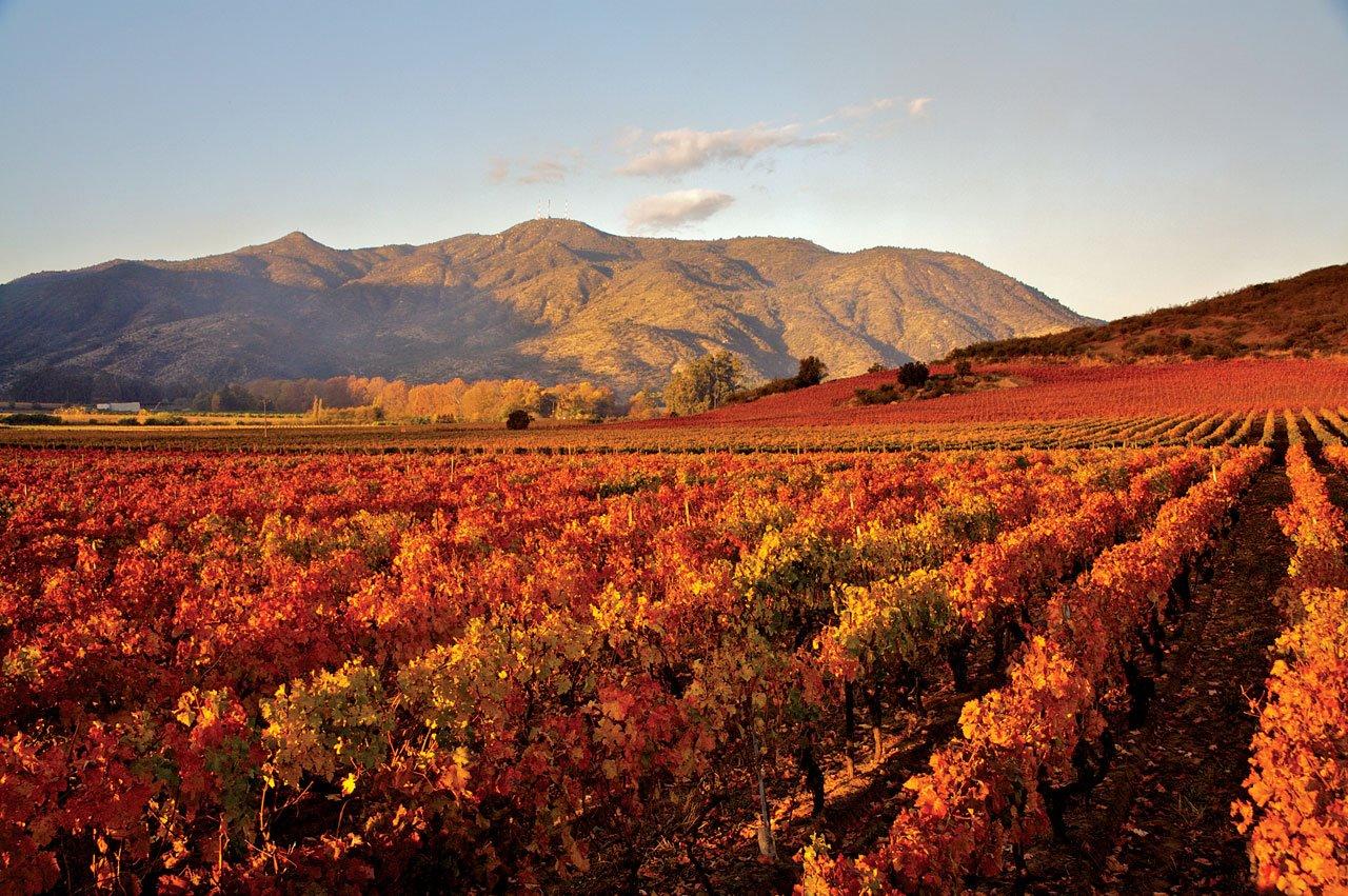chilean wine valleys